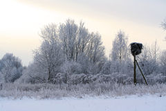 Winter forest covered with snow andh stork nest Royalty Free Stock Images