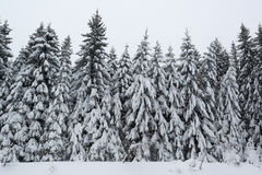 Winter forest covered by snow Stock Images