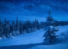 Winter forest covered with snow in a moon light royalty free stock image