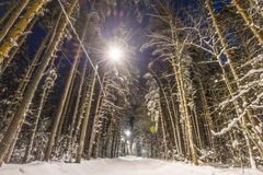 Winter forest covered with snow Stock Photography