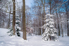 Winter forest covered with snow Stock Photos