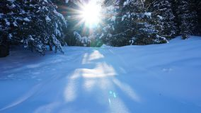 Winter forest covered with snow. The sun`s rays penetrate the trees. Shadow on snow from coniferous trees. Blue sky. Spruce covered with snow. The sun shines royalty free stock photos