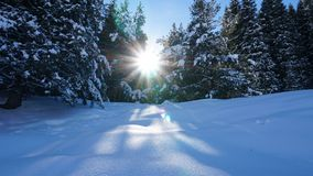 Winter forest covered with snow. The sun`s rays penetrate the trees. Shadow on snow from coniferous trees. Blue sky. Spruce covered with snow. The sun shines stock images
