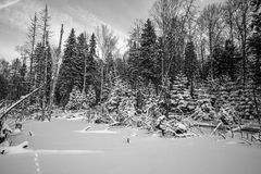 Winter forest covered with snow. tinted Royalty Free Stock Photography