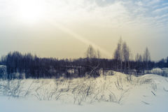 Winter forest covered with snow. tinted. Winter forest covered with snow on a cloudy day. tinted Royalty Free Stock Photo