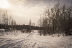 Winter forest covered with snow. tinted. Winter forest covered with snow on a cloudy day. tinted Stock Photography