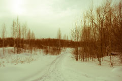 Winter forest covered with snow. tinted. Winter forest covered with snow on a cloudy day. tinted Stock Photos