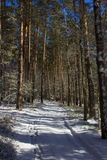 Winter forest in Czech Republic Royalty Free Stock Image