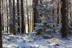 Winter forest in Czech Republic Royalty Free Stock Images