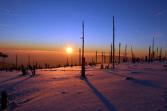 Winter forest destroyed by bark beetles during the sunset Stock Image