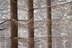 Winter forest details Royalty Free Stock Image