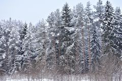 In the winter forest, each branch as it tries to give a winter mood. Charming its fragile beauty stock photo