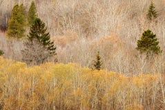 Winter forest in edmonton. Winter forest in the north saskatchewan river valley, edmonton, alberta, canada Stock Photo