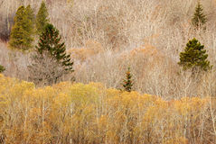 Winter forest in edmonton stock photo