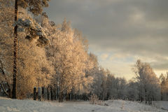 Winter forest. In the evening Stock Images