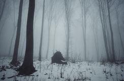 Winter in forest at evening on Christmas day Stock Photography