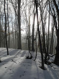 In the winter forest. Evening in the winter forest in Crimea mountains Stock Photo