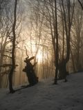 In the winter forest. Evening in the winter forest in Crimea mountains Stock Photos