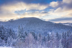 Winter forest in the evening Stock Image