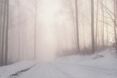 Winter forest fairytale Stock Images