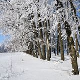 Winter forest on sunny day. Winter forest with falling snow, frozen trees covered with frost against of the blue sky on sunny day, Russia royalty free stock images