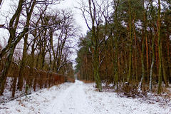 Winter forest. And the fence Royalty Free Stock Photo