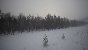 Winter Forest and Field stock footage
