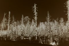 Winter forest after filling oil Aganskoye oil and gas field. Like that in Russia destroy nature Stock Images