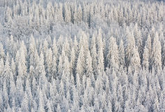 Winter forest in Finland. Winter forest with frosty trees, aerial view. Kuopio, Finland Royalty Free Stock Image