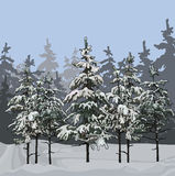 Winter forest with fir trees. Winter gray forest with fir trees Royalty Free Stock Image