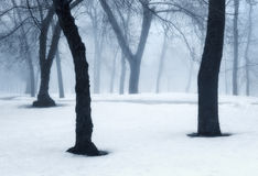 Winter forest in fog. Foggy trees in the cold morning. Enchanted misty woods. Beautiful mystical landscape with dark forest and white snow. Nature background Stock Photos