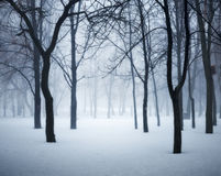 Winter forest in fog. Foggy trees in the cold morning. Enchanted misty woods. Beautiful mystical landscape with dark forest and white snow. Nature background Stock Images