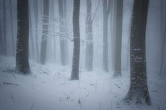 Winter in a forest with fog and frost on trees Royalty Free Stock Photography