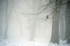 Winter forest with fog. Lonely leaf in winter forest with fog Royalty Free Stock Photo