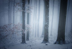 Winter in forest with fog and snow Royalty Free Stock Photos