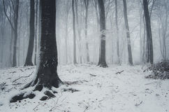 Winter in the forest with fog Stock Photo