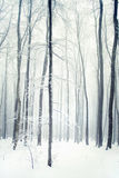 Winter forest Royalty Free Stock Image