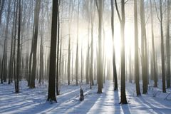 Winter forest in foggy weather in the sunshine stock photography