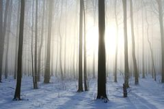 Winter forest in foggy weather in the sunshine royalty free stock photo