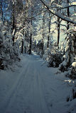 Winter forest with foot-path Stock Images