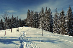 Winter forest with foot-path Royalty Free Stock Images