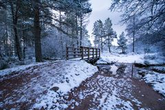 Winter forest and footbridge Stock Image