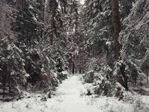 Winter forest with a footpath Stock Photos