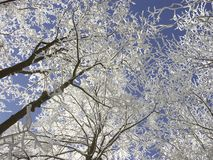 Winter forest, frost covered trees Royalty Free Stock Image