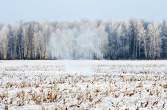 Winter forest in frost and snow on the blizzard snowstorm.  Stock Images