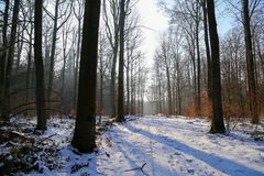 Winter forest. Frosty morning in winter forest.  stock image