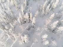 Winter forest with frosty trees, aerial view. Finland. Winter forest with frosty trees, aerial view. Lapland, Finland royalty free stock photos