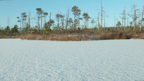 Winter forest on the frozen lake. Clean and frosty daytime. Smooth dolly shot stock footage
