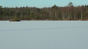 Winter forest on the frozen lake. Clean and frosty daytime. Smooth dolly shot stock video footage