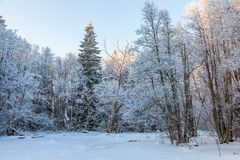 Winter forest at a frozen river Royalty Free Stock Photography